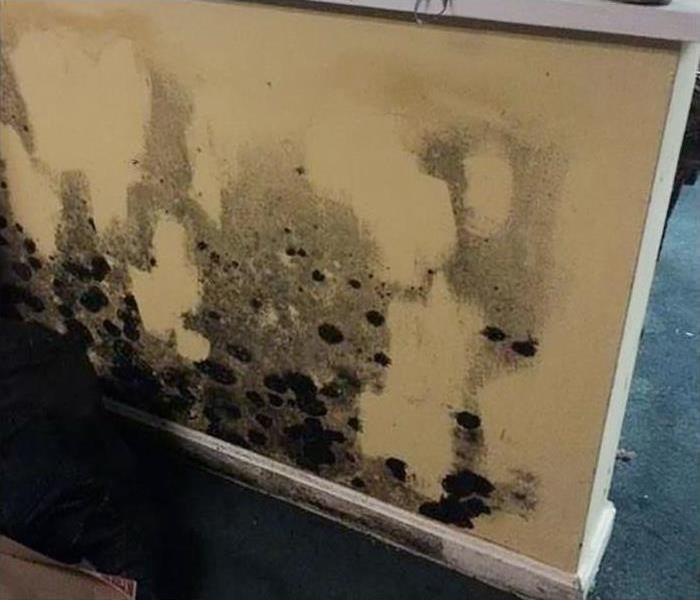 Mold Removal In Exeter