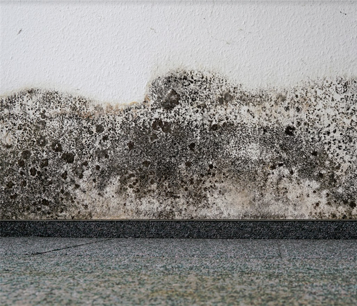 mold growing on a wall above the trim