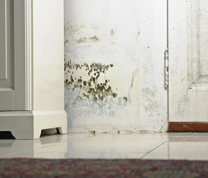 Mold Remediation Misconceptions About Mold Growth In Your Exeter Home