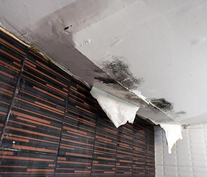 Mold Remediation Watch Out For Avoidable Mistakes When You Face Mold Damage In Exeter